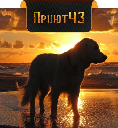 Приют43 Киров