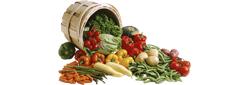 Овощные базы