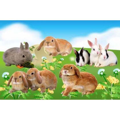 Песковский кролик